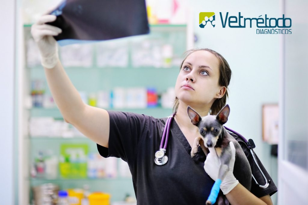 papel-do-medico-veterinario