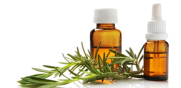 A combinação de alecrim e canela remédio natural contra carrapatos