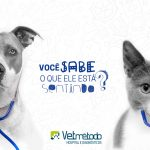 vetmetodo-comportamento-animal